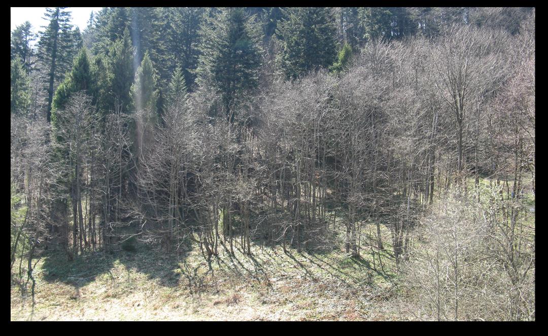 Lasy Bystrzyca Kłodzka